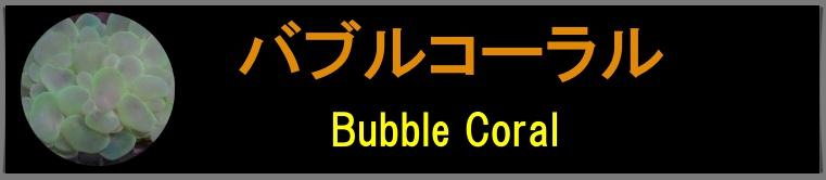 バブルコーラル
