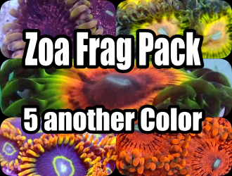 Zoa frag Pack (5another color)