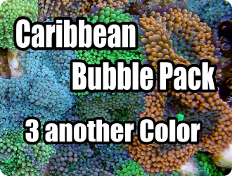 Caribbean Bubble Pack (3another color)