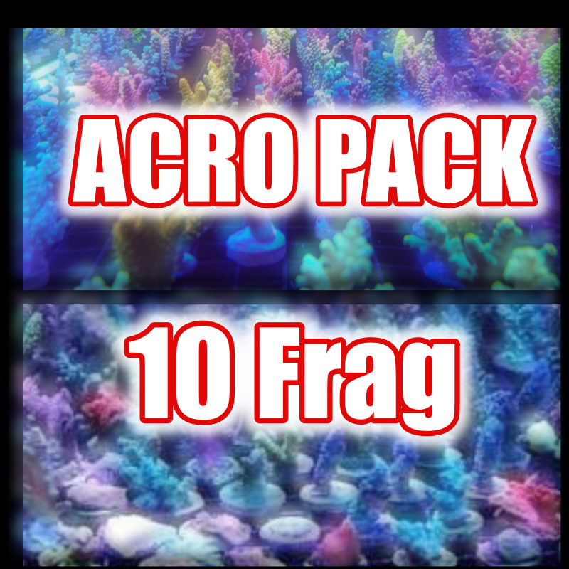 Acropora Frag Pack (Mix color) 10個セット