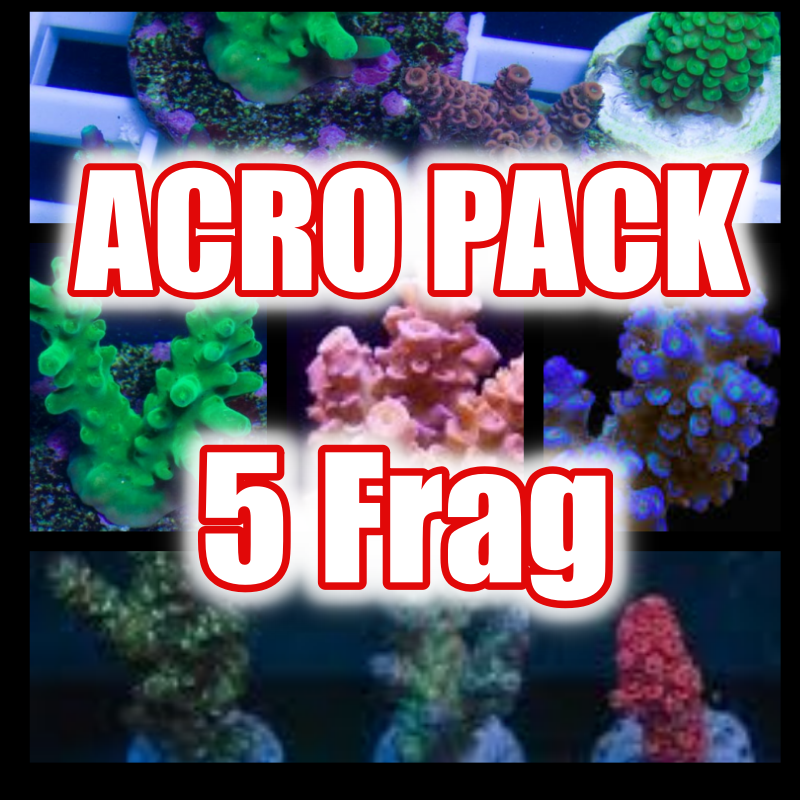 Acropora frag Pack (5Frag)