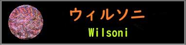 ウィルソニ